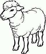 Sheep Coloring Pages Printable sketch template