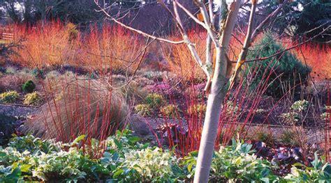 plant   month january bressingham gardens