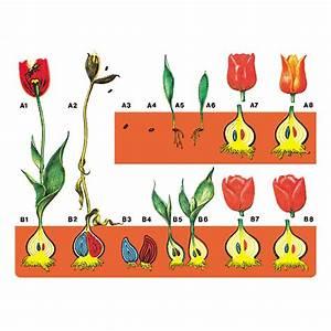 Bau Der Pflanze : bau und lebensvorg nge der pflanzen w 2866 ~ Lizthompson.info Haus und Dekorationen