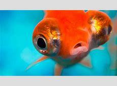 Peces Características principales y tipos de peces