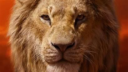 Lion Simba King 4k Donald Glover Wallpapers