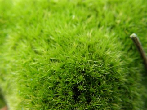 what causes moss in flower gardens garden guides