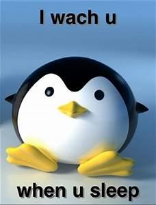 Socially Terrifying Penguin