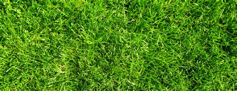 What Type Of Grass Should I Plant In Dallas, Tx?