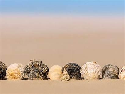 Seashell Artistic Sand Desktop