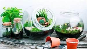 Pflanze In Flasche : l tzebuerger journal biotop in der flasche ~ Whattoseeinmadrid.com Haus und Dekorationen
