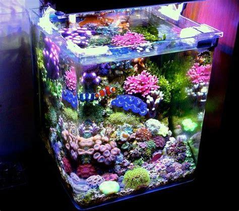 petit aquarium poisson 25 best ideas about petit aquarium on aquarium design planted aquarium and