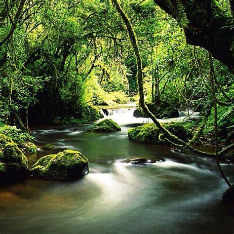 rainforest african jungle knysna south africa