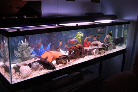Cichlidscom 120 Gallon Basement Fish Room Tank. Kitchen Table Diy. Starlight Kitchens. Small Kitchen Backsplash. The Kitchen Master. Disney Princess Kitchen Playset. Copper Kitchen Knobs. Restaurants On Kitchen Nightmares. Kitchen Cart Small