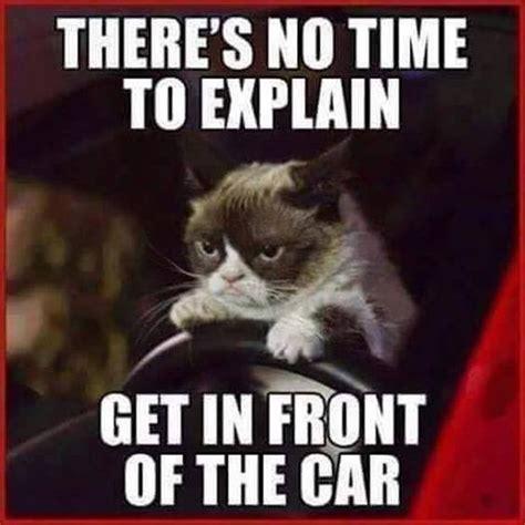 No Meme Cat - top 30 funny cat memes quotes words sayings