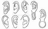 Different Ohren Satz Verschiedene Drawing Ear Ears Lobe Piercings Grunge Mod Earrings Brain Anatomy Detailed Human Isolated sketch template
