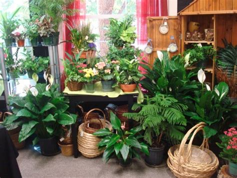 plants from lebanon garden of floral shop your