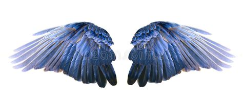 Blue Wings Stock Image. Image Of Flying, Crow, Wings