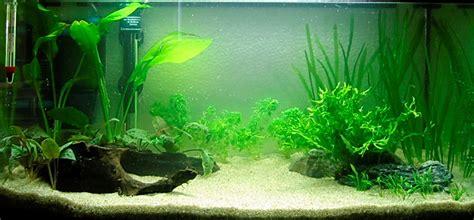 comment faire un aquarium plante comment r 233 aliser un paysage aquascape avec un aquarium 54