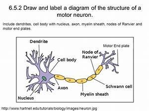 6 5  Part 1 The Nervous System