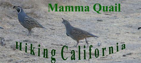 Mamma Quail Hiking California Remote Serene Juniper