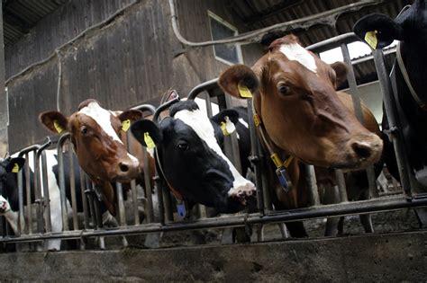 animal justice strengthening farmed animal welfare laws