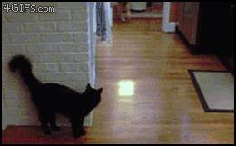 Cats And Dogs Cat GIF - Find & Share on GIPHY