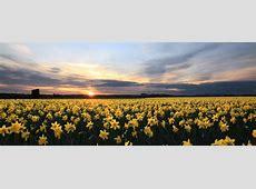 La Conner Daffodil Festival Photo Tours 2016