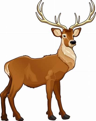 Clipart Reindeer Deer Transparent Clip Arts