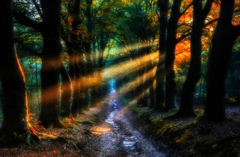 enchanted forest backgrounds   pixelstalknet