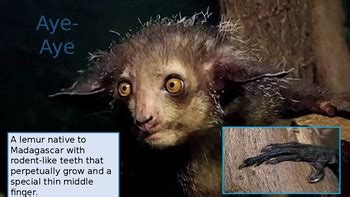 Weird Animals Presentation (for animal adaptations or