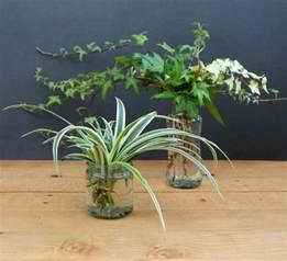 grow beautiful indoor plants in glass bottles a piece of