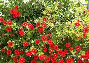 Balkonkästen Bepflanzen Beispiele : balkonkasten bepflanzen beispiele 10 calibrachoa ~ Lizthompson.info Haus und Dekorationen