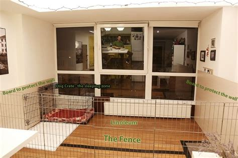 indoor kennel dog kennel dog rooms indoor dog room