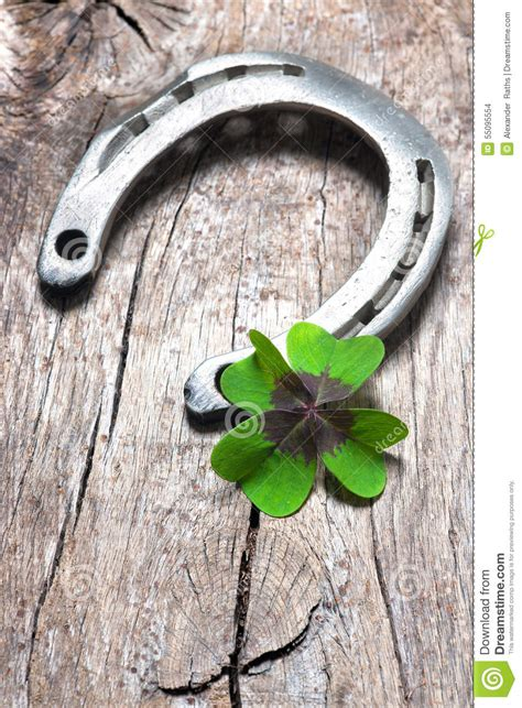 horseshoe   shamrock stock photo image  leaf