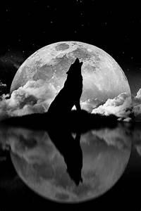 Wolf Howling at the Moon   Sun & Moon & Stars   Pinterest ...