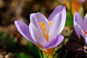 Bilder Blumen Kostenlos Downloaden : blumen bilder kostenlos naturfotos lizenzfrei ~ Frokenaadalensverden.com Haus und Dekorationen