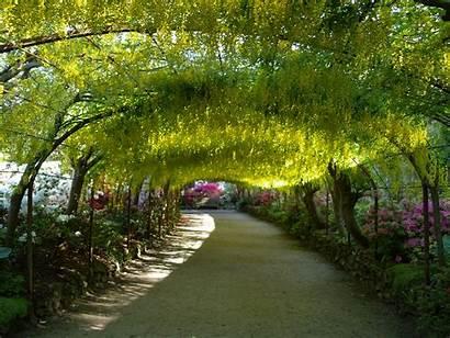 Bodnant Garden Laburnum Arch Gardens Wales Visit
