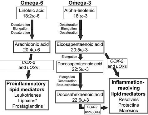 omega   omega  fatty acids  blood  breast tissue
