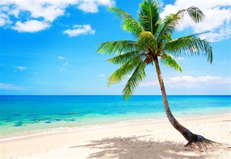 tropical beach wallpapers tropical in 2019 beach