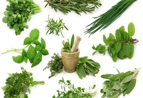 jenis tanaman herbal asal indonesia berkhasiat