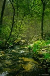 Pretty in the Woods Stream