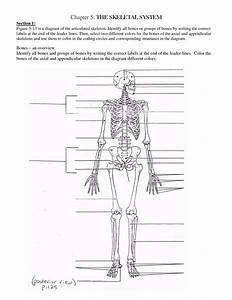 Diagram Of Skeletal System For Kids | www.imgkid.com - The ...