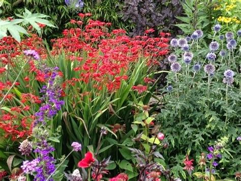 Natural Gardener Hours by Beautiful Colours Picture Of Poppy Cottage Garden Truro