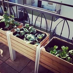 best 25 urban gardening ideas on pinterest growing With katzennetz balkon mit indoor grow garden