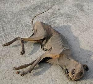 Dead cat for sale on eBay. Really. | Just wierd ...