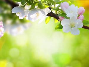 Spring Flowers Wallpapers HD Pictures – One HD Wallpaper ...