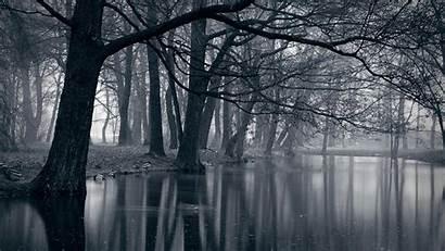 Forest Dark Wallpapers Definition