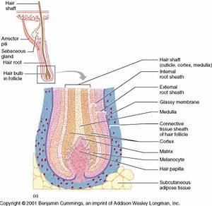 Bi280 01 Study Guide  2011-12 Dr Penrod