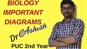 Biology Puc 2nd Year Important Diagram Karanataka Pu Board 2018