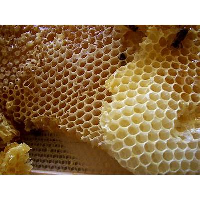 Honeycomb - Wikipedia