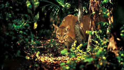 Forest Animals  Download Hd Forest Animals Wallpaper For