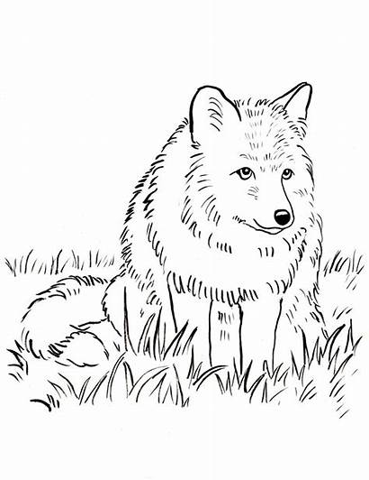 Fox Coloring Pages Printable Realistic Wolf Snowmobile