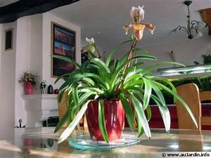 Marc De Café Plantes D Intérieur : plantes d 39 int rieur et lumi re ~ Melissatoandfro.com Idées de Décoration