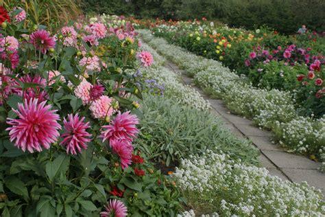 LU fotoarhīvs. LU Botāniskais dārzs.
